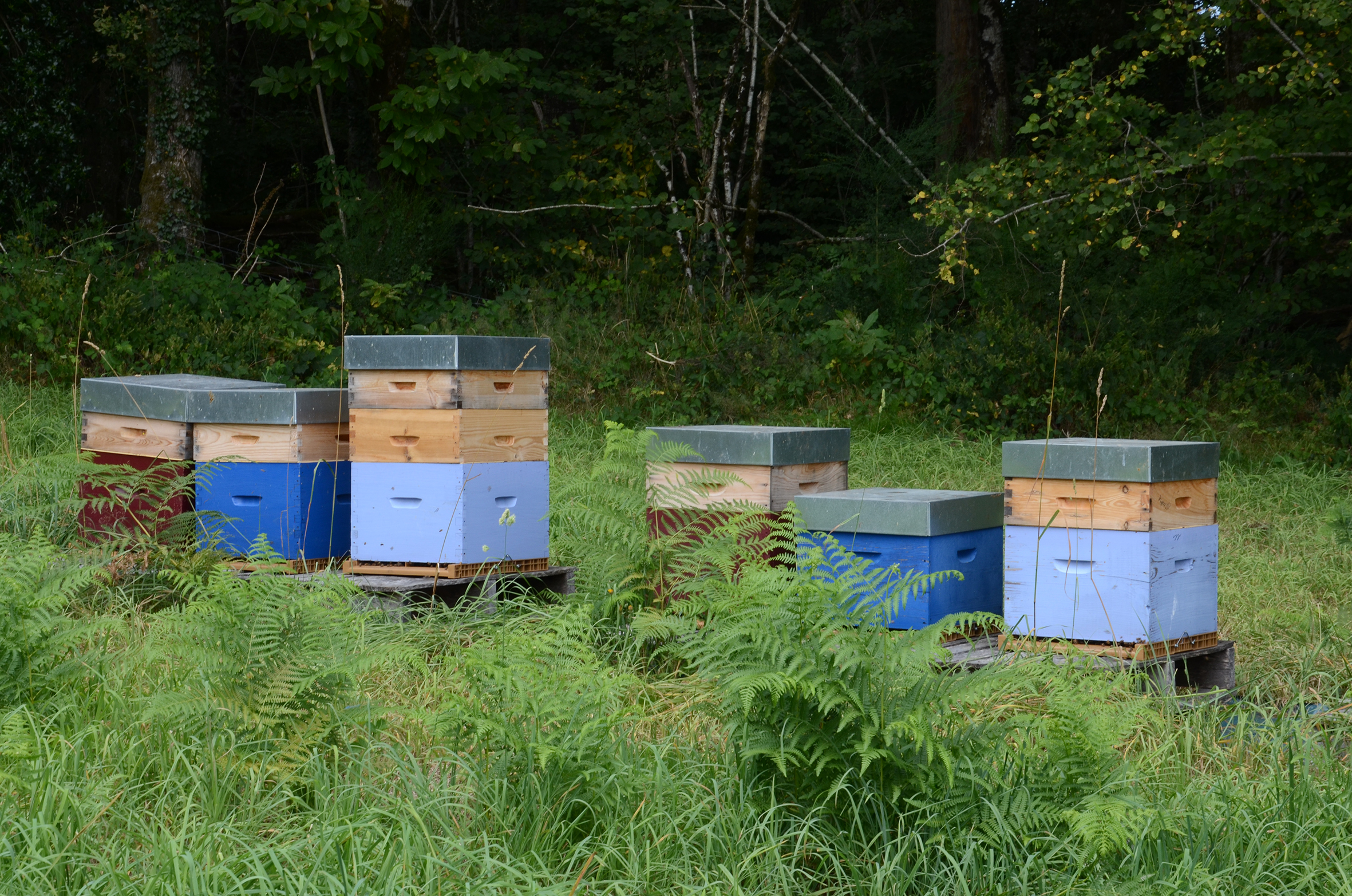 La question des abeilles mobilise